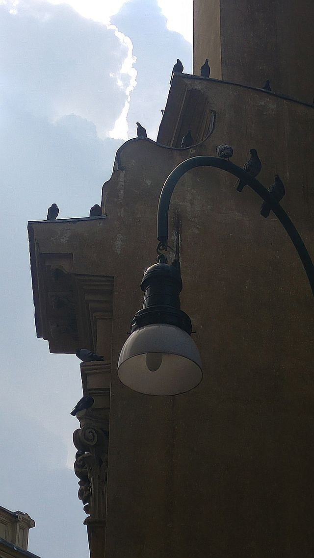 The birds perched everywhere and we noticed there's no deterring spikes here